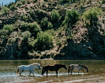 Wild Horses of the Salt River Fine Art Print #5