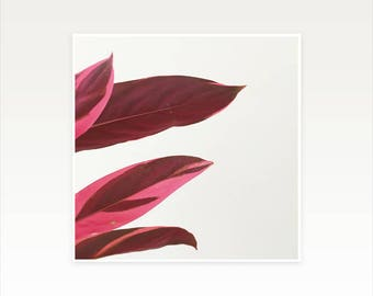 CLEARANCE SALE! Pink Plant Print, Contemporary Wall Art - Red Leaves I
