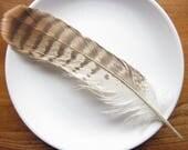 Buzzard Feather - Ethically Gathered.