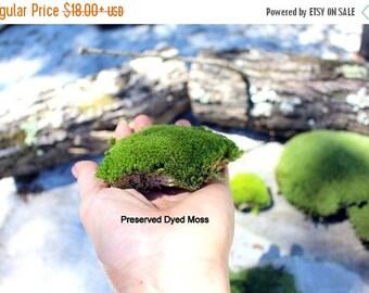 Save25% Preserved Moss-Pillow Moss-Cushion Moss-Quart or Gallon bag-NO WATER needed-Fairy Garden Moss-Wedding Moss