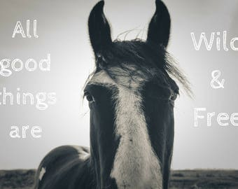 All Good Things are Wild and Free, Inspirational text photo print, quote, horse photograph, home decor, wall art, horse lover gift idea kids