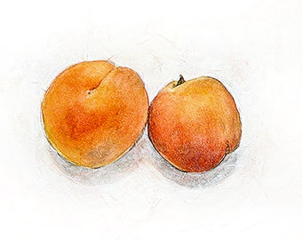 Apricot Watercolor Print- 5x7-  From Original Watercolor on Paper- Red, Orange, White- Fruit- Still Life- Two Apricots