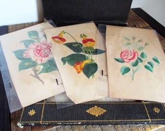 Trio of Vintage Hand Painted Watercolor Botanical Paintings