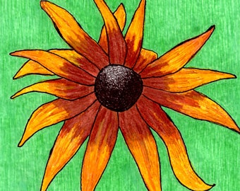 well, hello - drawing of black-eyed susan on watercolor paper