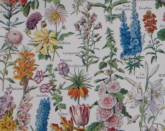 Original French vintage botanical print 'Fleurs' (FLOWERS) Adolphe Millot, Larousse Universel Published 1948