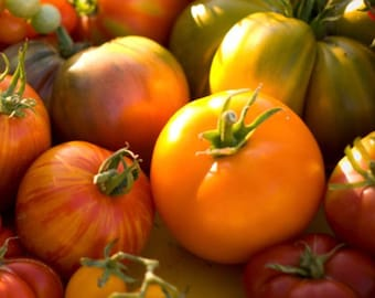 Heirloom Fresh from the Garden Tomatoes*By the pound