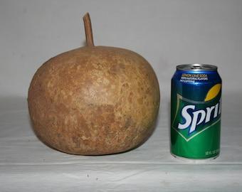 Small Bushel Gourd Uncleaned #1