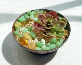1:6 scale Succulent Plant with metal pot for OOAK Dollhouse or Diorama (Blythe, Barbie, 12'' Fashion dolls, Bratz, Momoko)