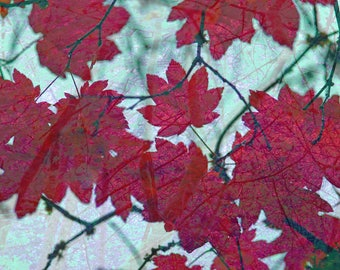 Red Maple Leaves, Home Sweet Home, leaf art, surreal photo, autumn photography, forest photography, combination art, free shipping