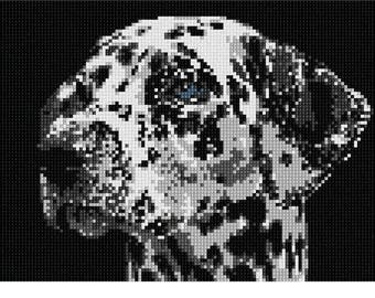 Needlepoint Kit or Canvas: Dalmation Face