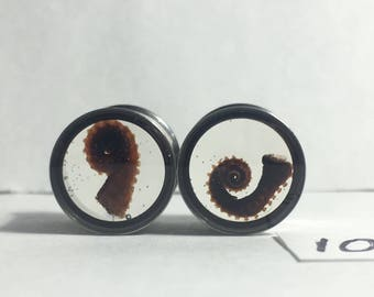 REAL Mummified Octopus Tentacles Specimen PAIR Resin Taxidermy Double Flare Steel Tunnel Gauge Plugs 10mm