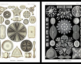 Ernst Haeckel's Vintage Artwork Diatomea Set