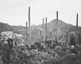 Arizona photography, black and white photography, cactus photography, desert photography, saguaro cactus, southwestern decor, cactus decor