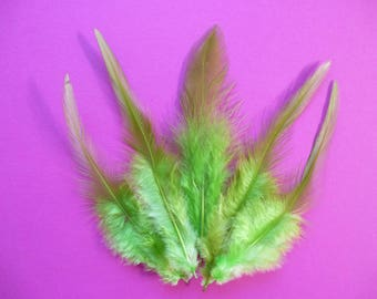 Apple green feathers.   dyed rooster feathers.   3-4.5inches.  8-12cm. hat making, sewing, hair accessories. set of 10