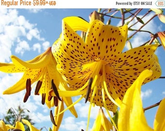 BIG SALE Tiger Lily- Yellow, ( Bulb/Plant) Gorgeous flowers with captivating fragrance, Unusual Double-Flowered Perennial, Lilium lancifoliu