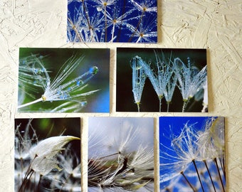 REFERENCE PHOTOS - Greeting Cards by Poetry of Nature