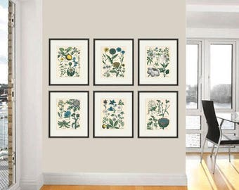 Kitchen Herbs wall art antique botanical print set of 12 herb