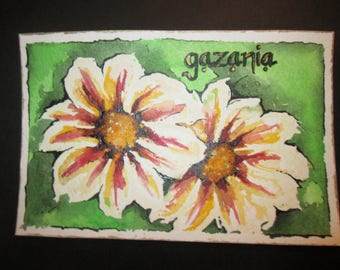 Hand painted postcard Gazania Flower Facts