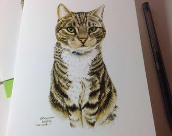 Tabby Cat sitting card,Trix the Tabby Cat Card, Tabby Cat Lovers,Cat Lover,Crazy about Cats Card