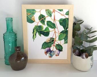 Gumnuts botanical print; Australian native plant eucalyptus wall art; Gum tree branch watercolor print A5, 10x8, A4; nature home decor