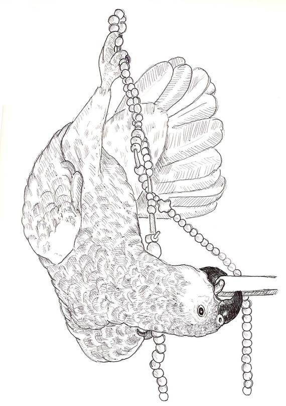 Sally Blanchard Original Pen and Ink Drawing of an Acrobatic Companion Blue-fronted Amazon Parrot at play