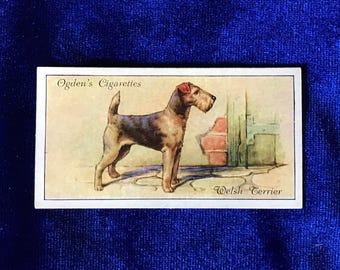1936 Welsh Terrier Dog Art Ogden's Cigarettes Card Valentine Gift!