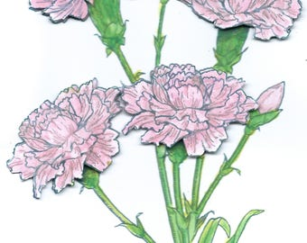 Carnations in 3D