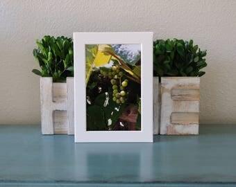 Grapevine, Print, 4x6, image, winery, grapes, san diego, california