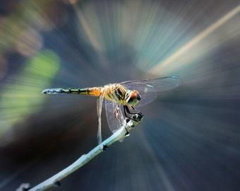 Cosmic Dragonfly