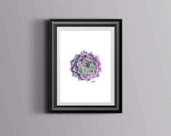 Purple Succulent A4 Drawing Print, Hand drawn art prints, Pink Echeveria, Home Decor, Gift for her, Housewarming gift, Made in Australia