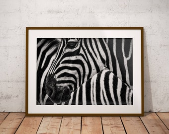 Zebra Wall Decor zebra wall decor | etsy