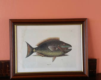 Vintage framed print * fish framed print * natural history print * Gosta Sundman fish print * Antique picture * fishes of Finland *fisherman