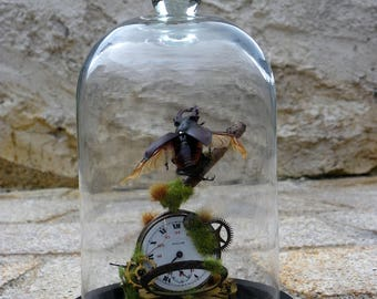 Bell with real insect (Lucanus Cervus).