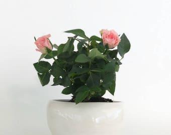 Small White Modern Minimalist Bowl