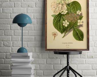 Hydrangea print, Antique botanical illustration, Pink Hortensia, Pink Hydrangea, DIGITAL DOWNLOAD