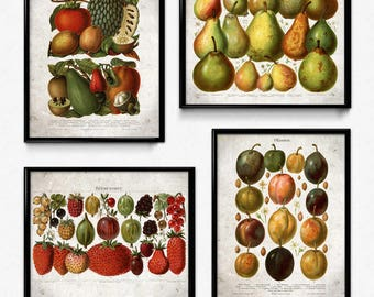 Fruit Vintage Print Set of 4 - Plum Pear Strawberries Prints - Fruit Print - Fruit Poster - Fruit Art - Fruit Picture - Kitchen Decor