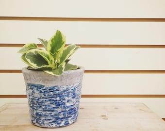 how to grow peperomia graveolens