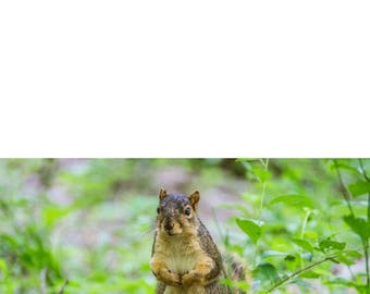 All Occasion Photo Greeting Card - Squirrel - Blank Inside