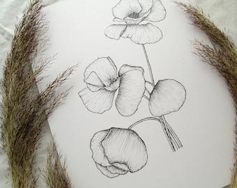 Poppy Flower Illustration Giclee Print