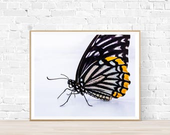 Graphic Butterfly Print |  Butterfly Printable Art |  Instant Download |  Butterfly Photography | Butterfly Art