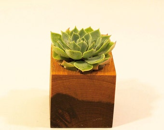 Ironwood Succulent Planter  - Simple Is Better Collection