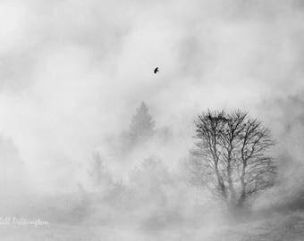Bird in the mist. Cornholme, Todmorden (photograph)