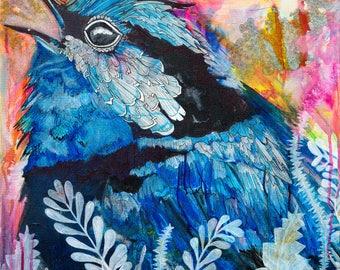 Blue Wren 2