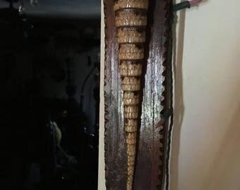 armadillo tail rare oddity taxidermy bone