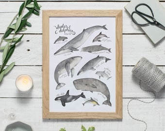 Whales and dolphins print - watercolour whales and dolphins I.D. chart - watercolor wildlife art - whale illustrtaion