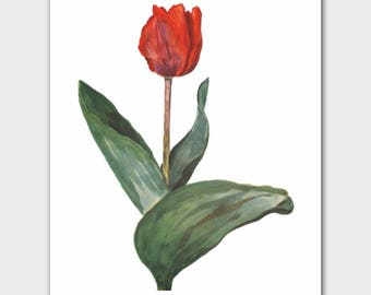 "Botanical Print (Living Room Decor, Red Wall Art, French Flower Housewarming Gift) --- ""Couleur Cardinal"""