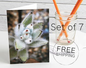 Succulent Photo Greeting Cards, Personalized Notes, Greeting Cards Handmade, Photo Note Card, Custom Greeting Cards, Blank Greeting Card Set