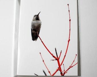 Oregon Humming Bird - Photography Card 2