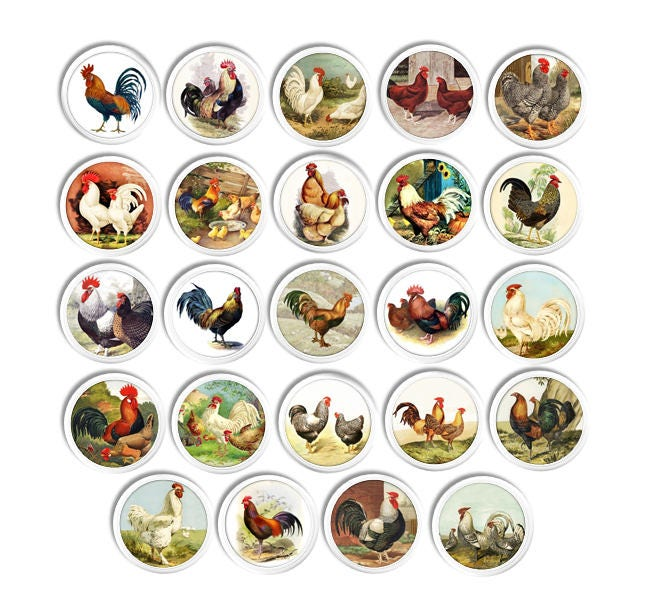 Cabinet Knobs Drawer Pulls Country Farmhouse Kitchen Hen