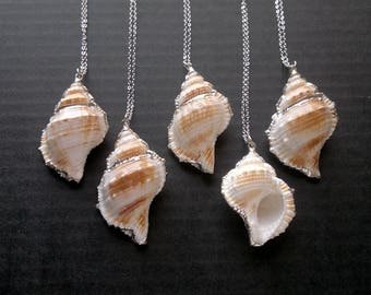 Sea Shell Necklace Silver Edged Shell Neсklace Shell Pendant Shell Jewelry Silver Electroplated Shell Necklace Silver Dipped Natural Shell